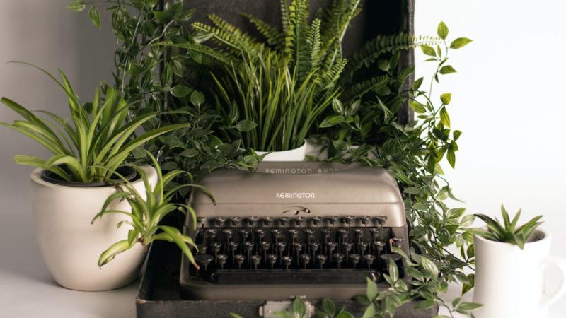 【室内で育てる観葉植物の種類・品種】株の大きさ・葉っぱのサイズごとに紹介!