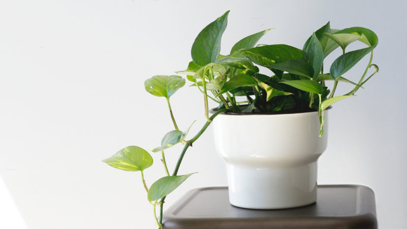 育てやすい観葉植物ランキング!「大型・小型・おしゃれ・初心者向け」ごとにトップ3を紹介