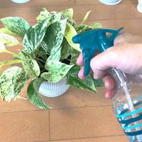 [観葉植物の水やり③]霧吹きで効果的に湿度を与える