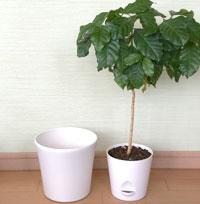 【ケース2】成長して植物が大きくなったとき