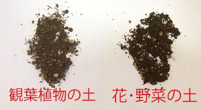 [違い② 見た目・手触り]ふかふか→さらさら