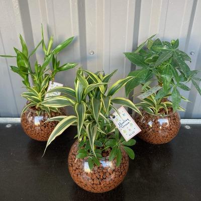 【メリット1】観葉植物のラインナップが豊富