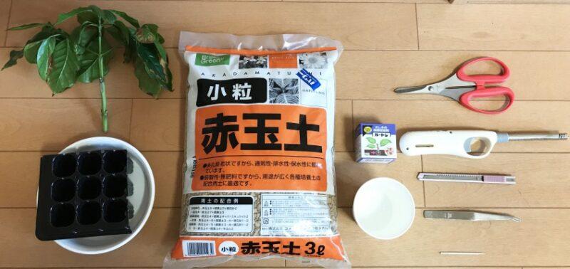 【「コーヒーの木」挿し木の手順1】5~8月ごろになったら、道具を準備する