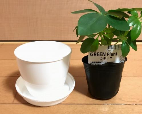 【100円ショップ ダイソーのミニ観葉植物用】植え替えにおすすめの格安プラスチック鉢を紹介します【100均】