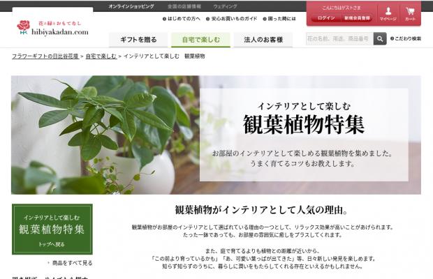 観葉植物のおすすめ人気通販サイト日比谷花壇(hibiyakadan.com)