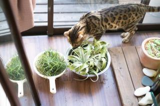 エアプランツ栽培のコツ:上手に育てる6つのポイント