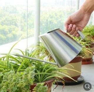 【観葉植物の水やりの方法1】水やりの基本とタイミングを知る手順