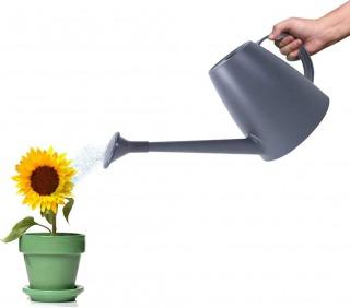 【観葉植物の水やりの方法2】水やりのポイント