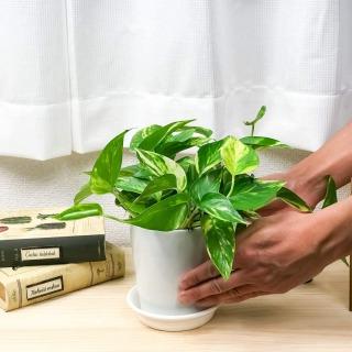 人気観葉植物 ポトスへの肥料の与え方と与える時期