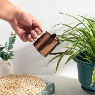 【観葉植物の水やりの方法4】人気品種の水やり具体例