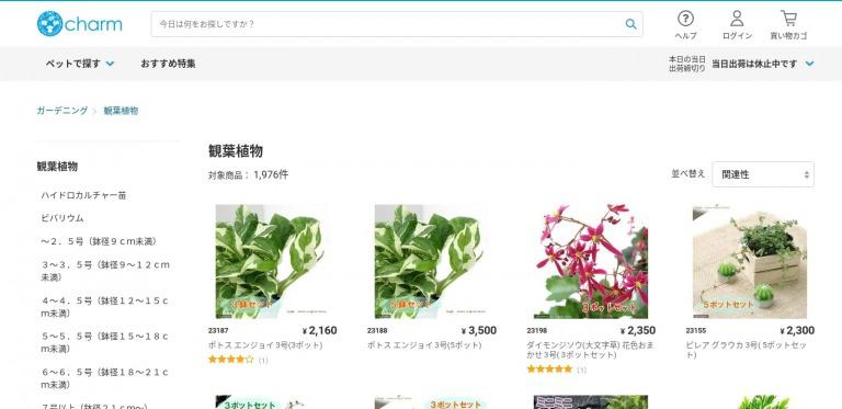 観葉植物のおすすめ人気通販サイトcharm(チャーム)
