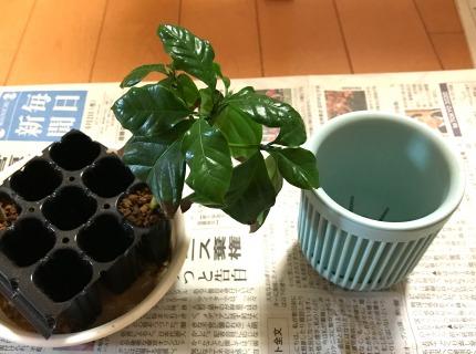 【挿し木の植え替え(鉢上げ)手順2】鉢や道具を準備する