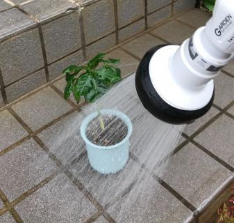 【挿し木の植え替え(鉢上げ)手順5】水やりする→完成!