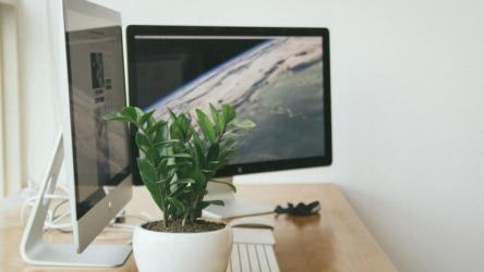観葉植物のおすすめ通販サイトをご紹介